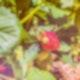 Erdbeerfeld 16_6
